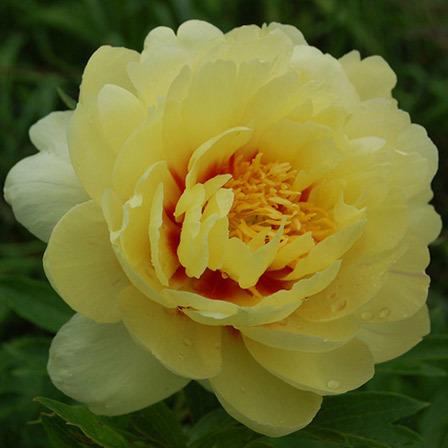 O Que as Belíssimas Flores Amarelas Dizem
